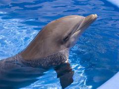 Dolphin, Busch Gardens, Tampa